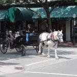 Savannah Pferde