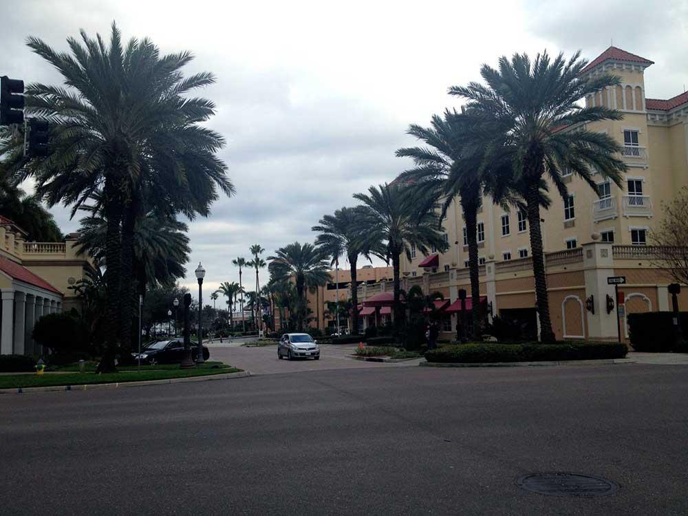 Florida Palmen