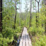 Okefenokee Swamp Steg